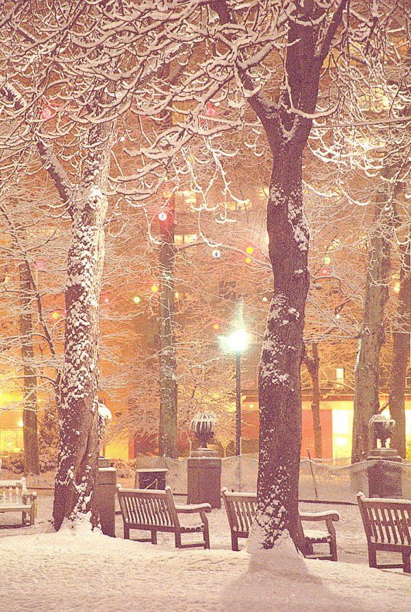 Three Benches, Rittenhouse Square, Philadelphia, photograph