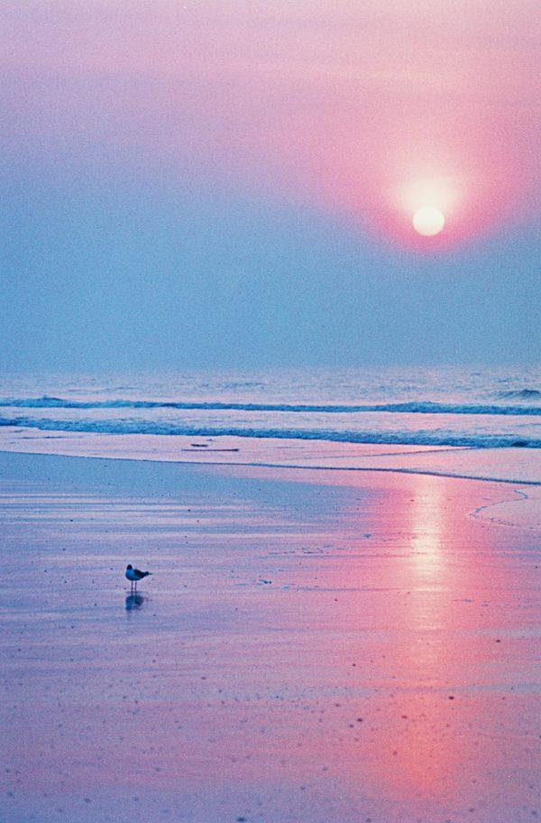 Bird On The Beach, Brigantine New Jersey, photograph