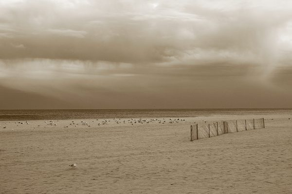 Sea Gulls and Fence, Seaside Heights, New Jersey, photograph